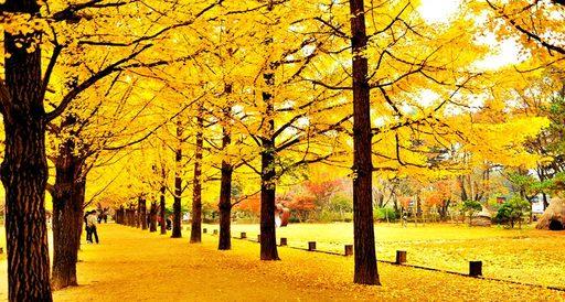 Đảo Nami - Thiên đường Hàn Quốc mùa thu